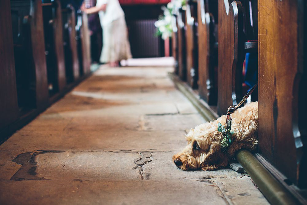 buddy the dog in the church